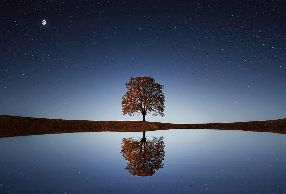 Sylvotherapie-arbre